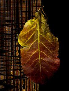 Exposição FOLHAS da fotógrafa Cidinha Barnabé