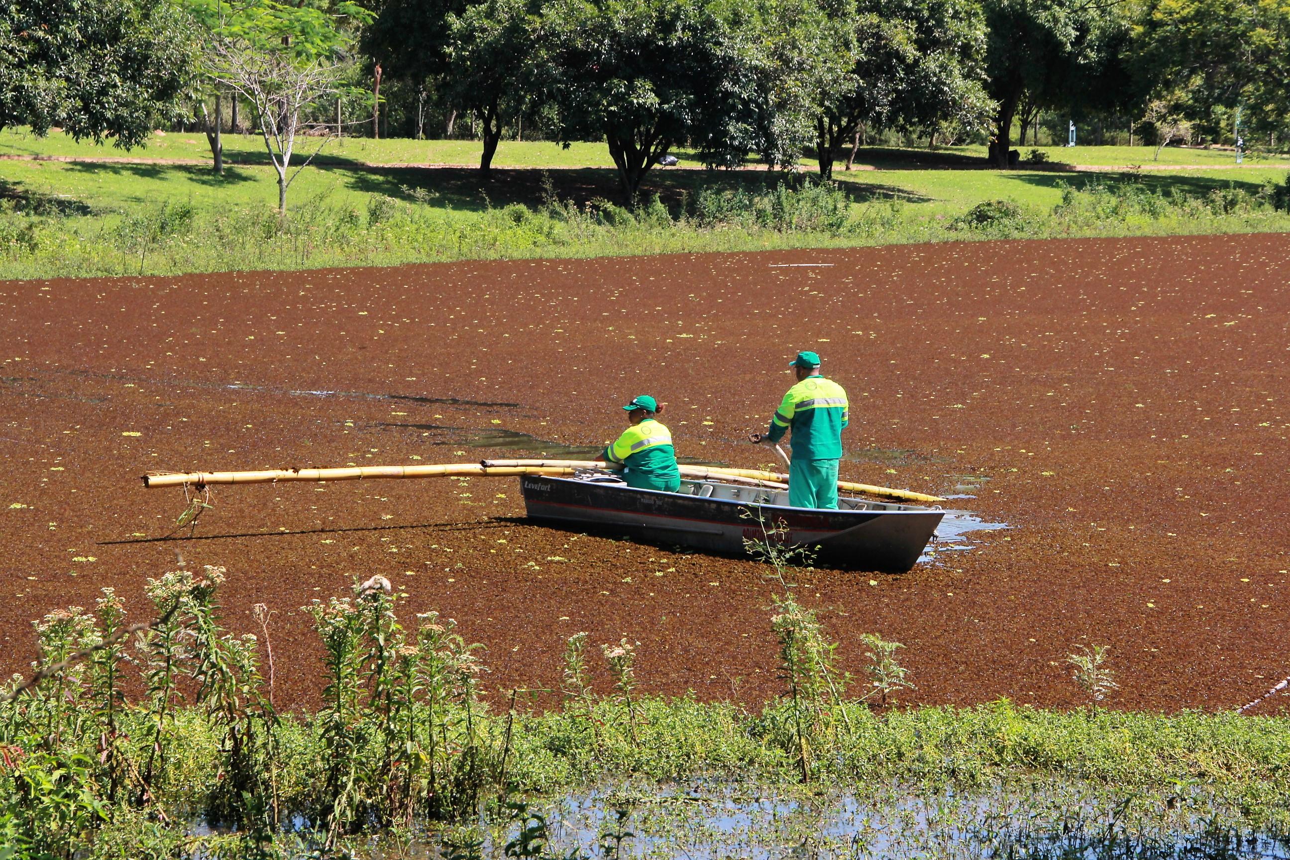 27 de dezembro de 2018 Secretaria de Meio Ambiente deu início a limpeza de  aguapés no Parque do Lago d6fa9c7f05046