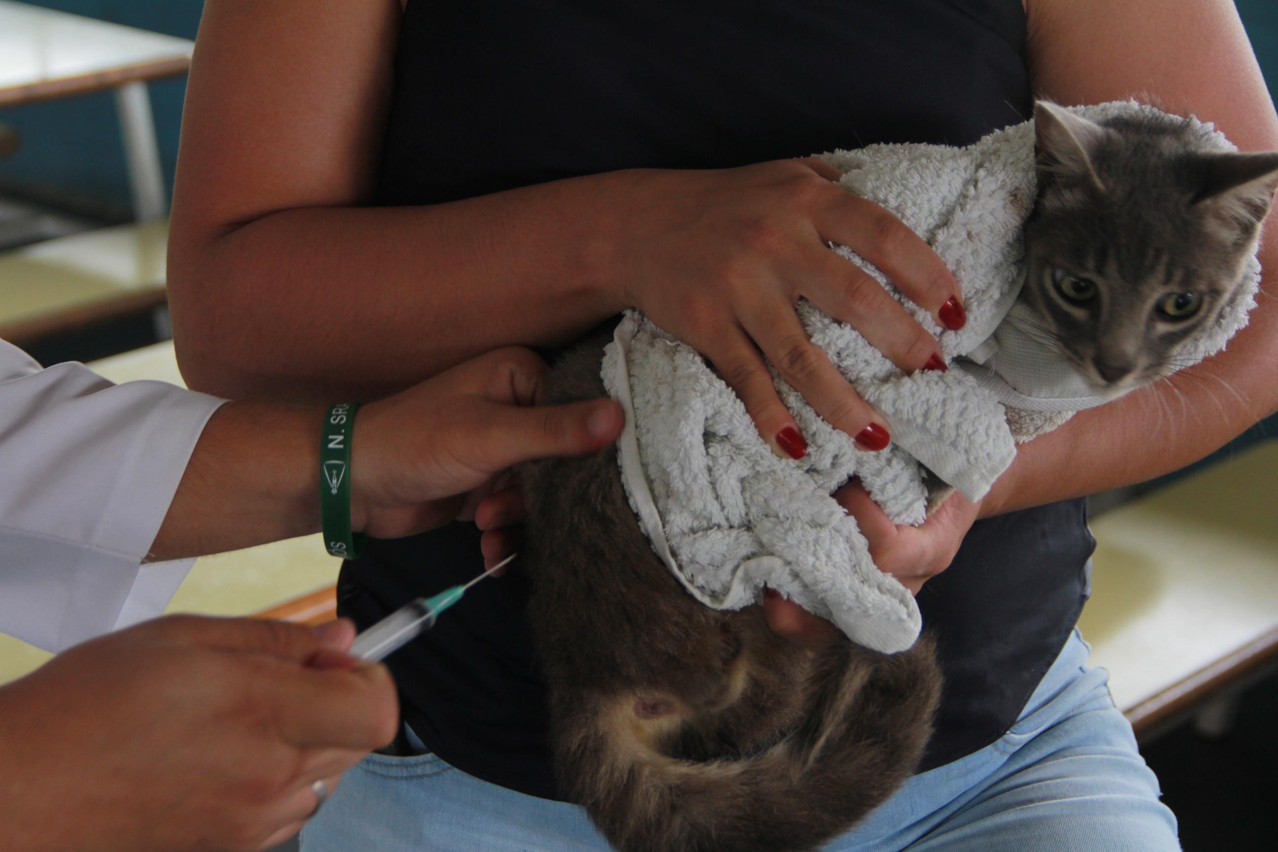 4ª fase da vacinação antirrábica vacinou 1.900 animais